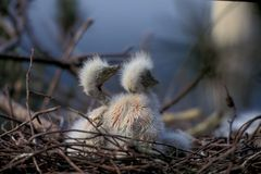 Birds on Nest. Nature Details View royalty free stock image