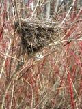 Birds nest. Set in trees stock image