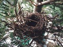 Birds nest. Birdsnest in christmas tree royalty free stock photos