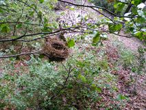 Birds nest on a branch. Dry leaves on the ground and green trees. This is the forest of La Guardia, in Abruzzo, Italy royalty free stock images