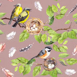 Birds, nest on branch. Seamless repeating pattern. Watercolor Royalty Free Stock Photography