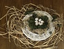 Birds nest. Stock Image