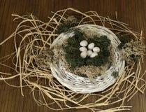 Birds nest. Stock Image