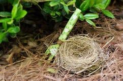 Birds Nest With Decorative Garden Fork Stock Image