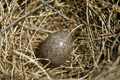 Birds nest with egg Stock Image