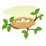 Birds Nest and Egg on tree branch. Stock Vector of a Birds Nest and Egg Stock Images