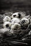 Birds nest with eggs Stock Photography