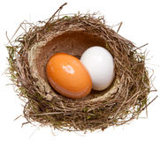 Birds nest with eggs inside, Stock Photo