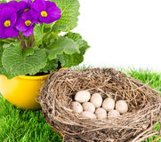 Birds nest with eggs and primulas flowers Royalty Free Stock Image
