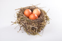 Birds nest with eggs. Real birds nest isolated on white background with three brown eggs royalty free stock photos