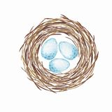 Birds nest with eggs. Watercolor illustration royalty free illustration