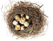 Birds nest with eggs on the white background. () Royalty Free Stock Image