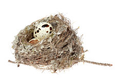 Birds nest with eggs on the white background. (isolated) Stock Image