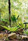 Birds Nest fern in tropical garden. Large Birds Nest fern in tropical garden stock photo
