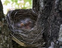 Birds nest in the forest stock image