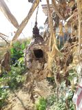 Birds nest. Found birds nest. Kashi ghat is covered with flowers. MAHADEV royalty free stock photos