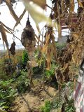 Birds nest. Found birds nest. Kashi ghat is covered with flowers. MAHADEV stock images