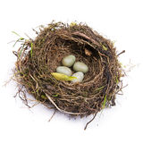 Birds nest Stock Image