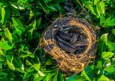 Birds nest in green leaves, bird home, animal crafted objects. A Birds nest in green leaves, bird home, animal crafted objects royalty free stock photo