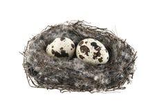 Birds nest. Isolated on white background Royalty Free Stock Image