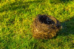 Birds nest laying in the grass, animal crafted home with twigs, spring season background. A birds nest laying in the grass, animal crafted home with twigs stock images