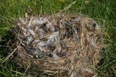 Birds Nest Royalty Free Stock Photos