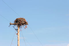Birds nest on pole. Nest on utility pole against blue sky Royalty Free Stock Photography