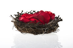 Birds nest with rose petals Royalty Free Stock Images