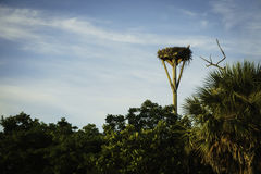 Birds nest at Sanibel Island. Florida in the summer royalty free stock photos