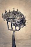 Birds Nest Stock Photos