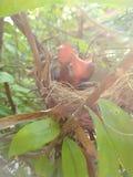 Birds in a nest. Birds nest tree life kidbirds royalty free stock photo