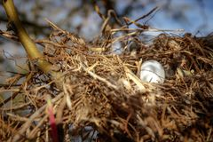 Bird`s nest royalty free stock photography