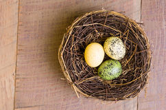 Birds nest with three eggs Royalty Free Stock Photography