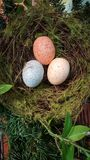 Birds nest with three multicolored eggs in a garden. Three multicolored eggs in a nest in a garden Stock Image