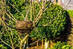 Birds nest in a tree in the garden, spring season, bird home, animal crafted homes. A birds nest in a tree in the garden, spring season, bird home, animal stock image
