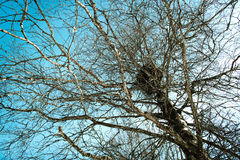 Birds nest in a tree Royalty Free Stock Images