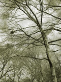 Birds nest in trees. Central park, nyc royalty free stock photos