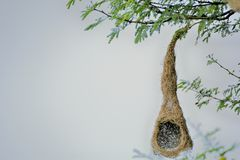 Birds` Nest under construction royalty free stock photos