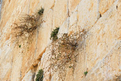 Birds Nest in the Western Wall Stock Photography