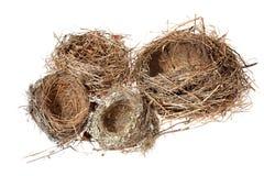 Birds nest on the white background. (isolated) Stock Photos