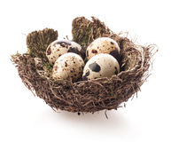 Free Birds Nest With Eggs Stock Images - 47856404