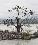 Birds nesting Stock Image