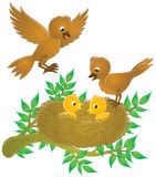 Birds and nestlings Royalty Free Stock Photo