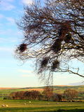 Birds nests against farmland Royalty Free Stock Images