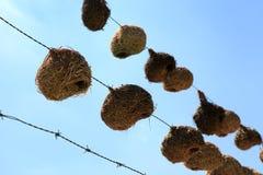 Birds nests. Stock Image
