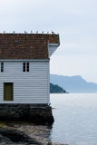 Gulls on the roof in Norway Royalty Free Stock Images