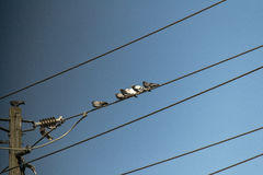 Birds. A number of pigeons on a wire Stock Images