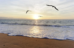 Birds Ocean Flying. Is three birds flying toward the bright peaceful sun ocean horizon Royalty Free Stock Photos