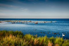 Birds at ocean. Ocean view in Swedish south coast royalty free stock photography