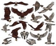 Free Birds Of Prey, Predatory Eagle And Hawk Falcons Stock Photo - 143704400